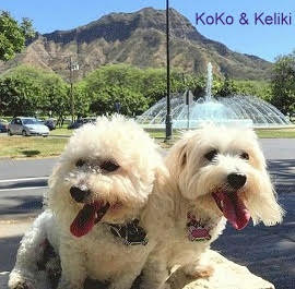 KoKo and Keleiki